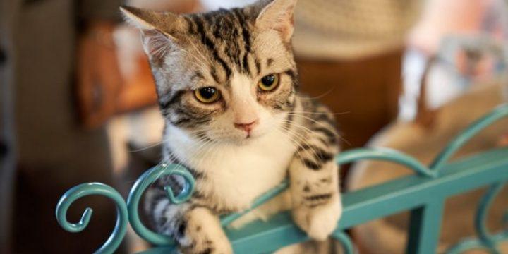 Daftar Harga Kandang Kucing dan Cara Memilih Kandang Kucing Persia yang Tepat